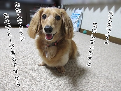 kinako5651.jpg