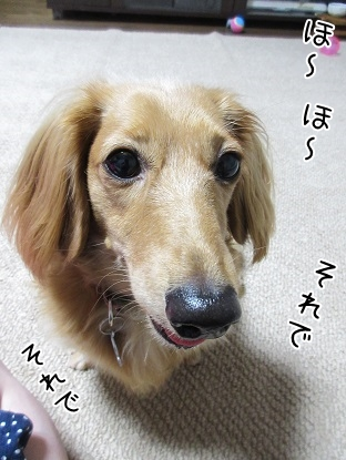 kinako5652.jpg