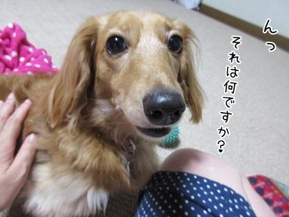 kinako5657.jpg