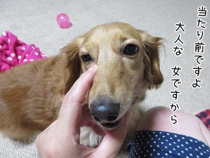 kinako5660.jpg