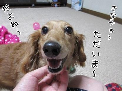 kinako5662.jpg