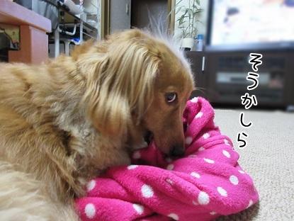 kinako5664.jpg