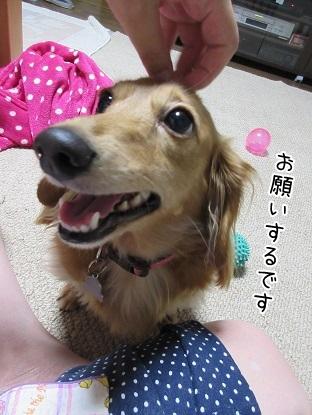 kinako5665.jpg