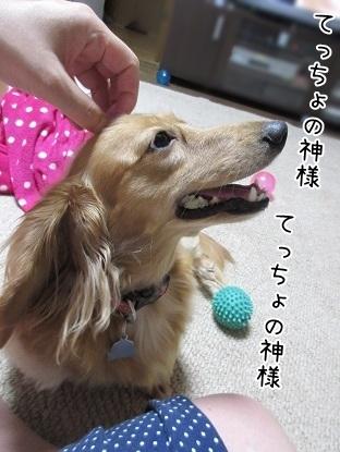 kinako5666.jpg