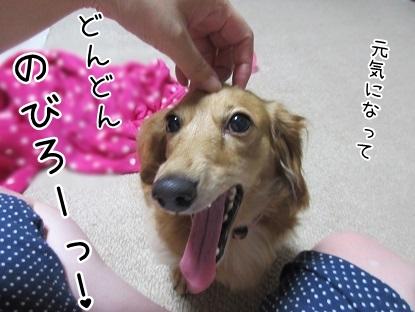 kinako5668.jpg