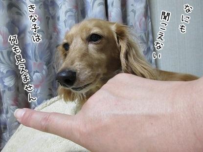kinako5672.jpg