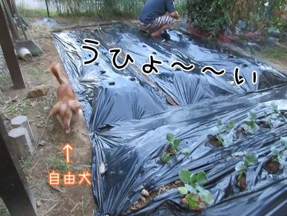 kinako5683.jpg
