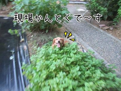 kinako5685.jpg