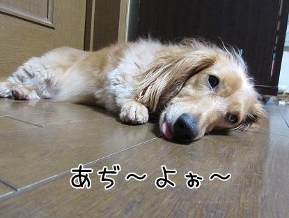 kinako5691.jpg