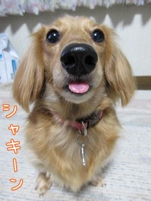 kinako5692.jpg
