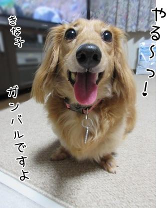 kinako5695.jpg
