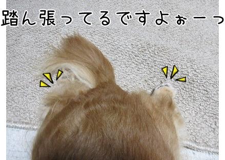 kinako5699.jpg