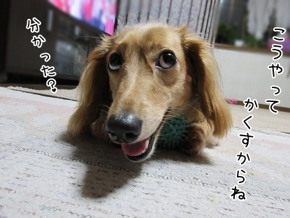 kinako5702.jpg