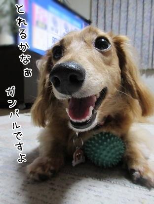 kinako5703.jpg