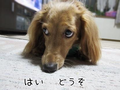 kinako5705.jpg
