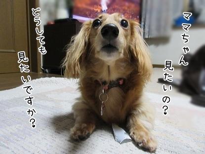 kinako5709.jpg