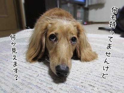 kinako5712.jpg