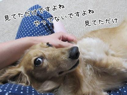 kinako5722.jpg
