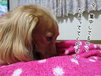 kinako5727.jpg