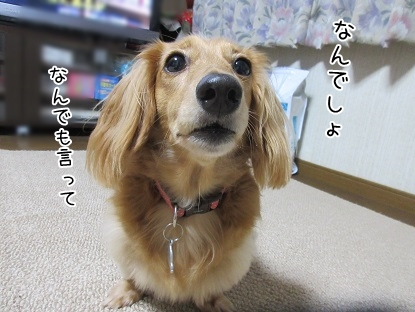 kinako5739.jpg