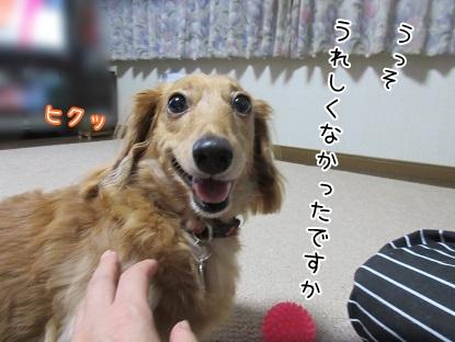 kinako5742.jpg