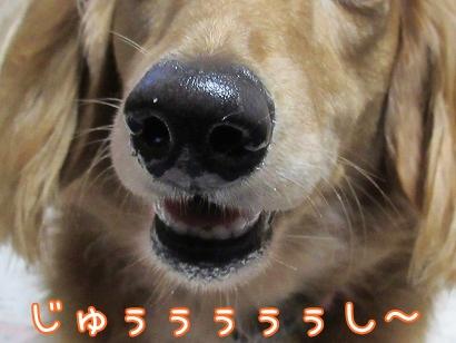 kinako5743.jpg