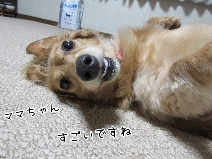 kinako5746.jpg