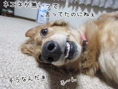 kinako5747.jpg