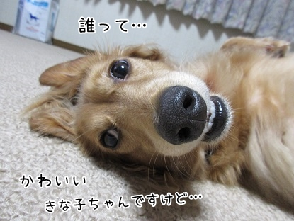 kinako5748.jpg