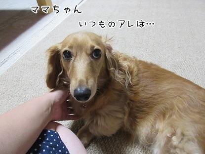 kinako5751.jpg