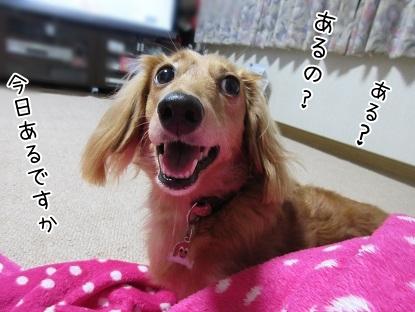 kinako5761.jpg