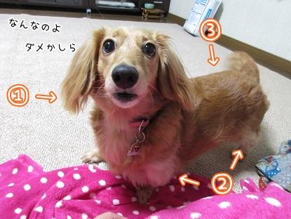 kinako5770.jpg
