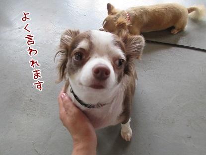 kinako5778.jpg