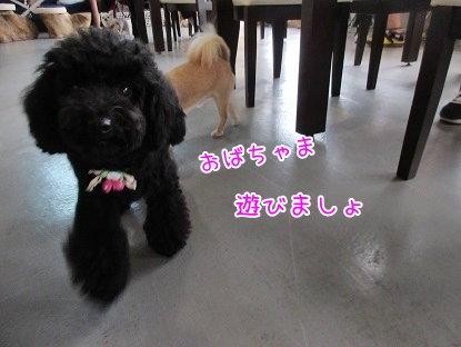 kinako5779.jpg