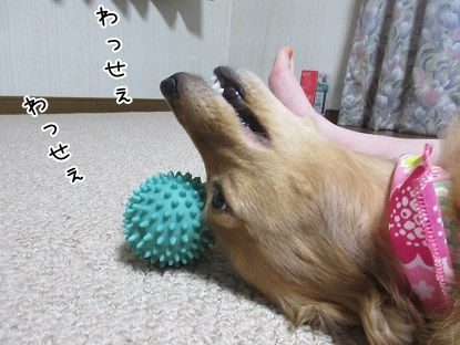 kinako5786.jpg