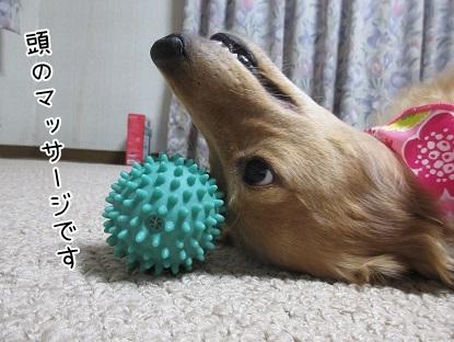 kinako5787.jpg