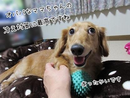 kinako5796.jpg
