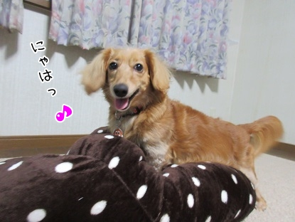 kinako5798.jpg