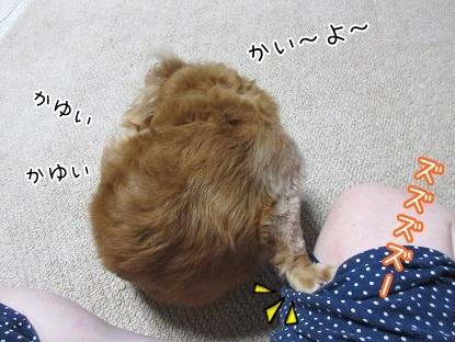 kinako5805.jpg