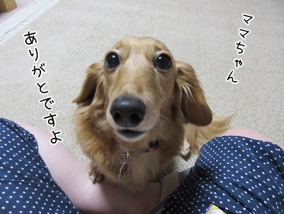 kinako5809.jpg