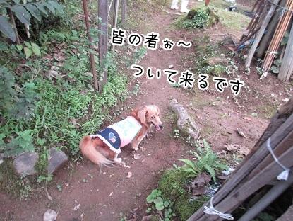 kinako5816.jpg