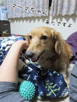 kinako5823.jpg