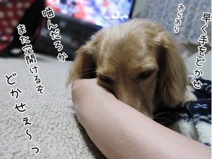 kinako5827.jpg
