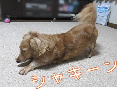 kinako5833.jpg