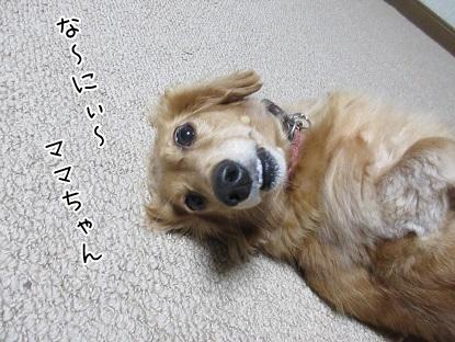 kinako5836.jpg