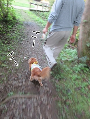 kinako5864.jpg