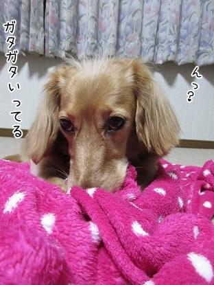 kinako5881.jpg