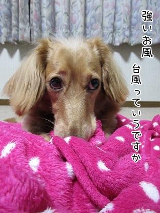 kinako5883.jpg