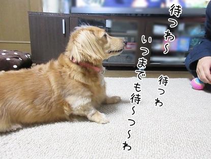 kinako5899.jpg