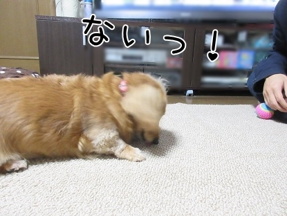 kinako5900.jpg